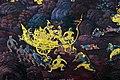 จิตรกรรมฝาผนังวัดพระศรีรัตนศาสดาราม 0005574 by Trisorn Triboon D85 0390.jpg
