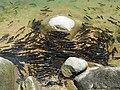 อุทยานแห่งชาติน้ำตกพลิ้ว จ.จันทบุรี (10).jpg