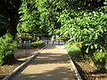 中島飛行機専用線、クスノキのゲート。 クスノキの巨木がお出迎え。樹下(地図マーカー)より北向き(中島飛行 - panoramio.jpg