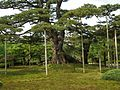 兼六園 Kenroku-en - panoramio.jpg