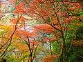 吉野山・七曲りにて Nanamagari 2011.11.27 - panoramio (1).jpg