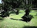 國父紀念館內公園景觀特寫 - panoramio - Tianmu peter (25).jpg
