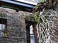 坪林老石屋 Old Stone House at Pinglin - panoramio.jpg