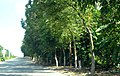 广东省江门市S271公路景色 - panoramio (101).jpg