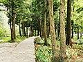 庐山景区 通往三叠泉的路上 01.jpg