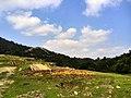 新丰司茅坪林场20150412 - panoramio (129).jpg
