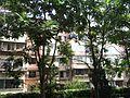 筱薇社区 - panoramio - 筱薇就是筱薇.jpg