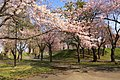 農試公園 (Noshi Park) - panoramio (14).jpg