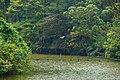 頭寮大池 Touliao Pond - panoramio.jpg