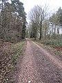 -2019-03-02 Track inside Bacton Woods, Norfolk (2).JPG