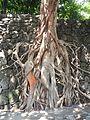 0011jfArroceros Forest Park Manila Ermita Fences Villegas Streetfvf 01.jpg