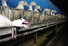Foie gras modifier   modifier le code  04eb8e80540
