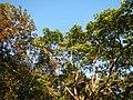 0581jfLandscapes Mabalas Diliman Salapungan Paddy fields San Rafael Bulacan Roadsfvf 15.JPG