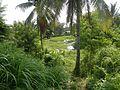 09175jfLandscape paddy fields grasslands villages Bridges Bulacan Bypass Arterial Roadfvf 11.jpg
