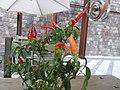 1- a Chili peppers, Author David Adam Kess, Photography by David Adam Kess, pic.bb.jpg