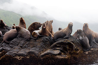 Moneron Island - Sea lions on Moneron Island