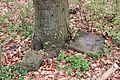 14-04-07-franzosenbunker-eberswalde-25.jpg