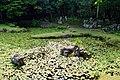140720 Jouei-ji Yamaguchi Yamaguchi pref Japan10s3.jpg