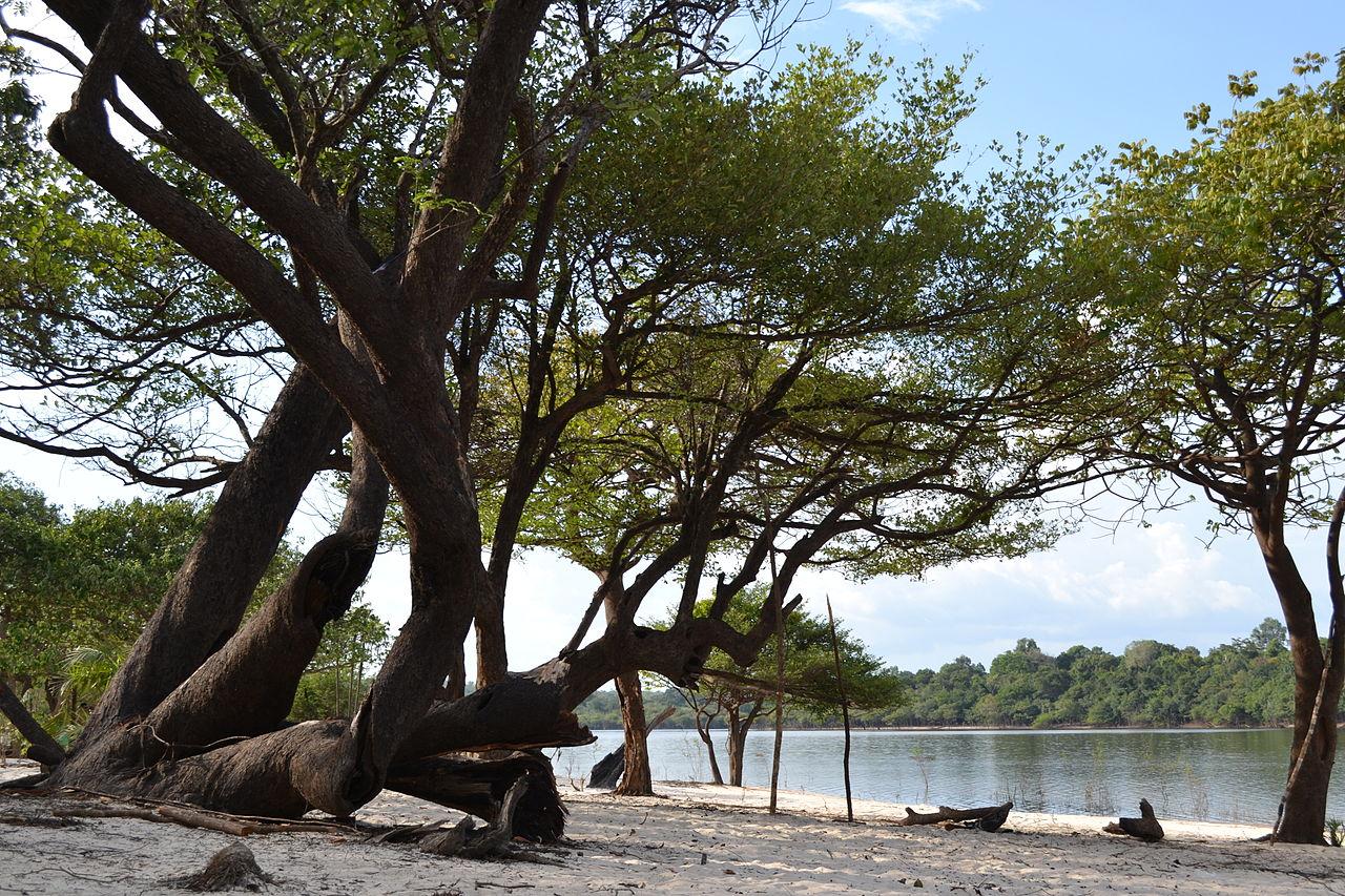 19- Lago do Batata Reserva Biológica do rio Trombetas Pará- Foto de Carolina de Melo Franco.JPG