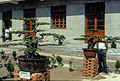 1983 in Jiangsu, bonsai exhibition.jpg