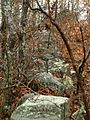 2006 Falmouth stone wall Massachusetts 306983659.jpg