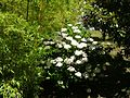 2008 07 Botanical Garden Meran 70110R0111.jpg