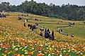 2014-04-04 石象湖 郁金香 liuzusai - panoramio (77).jpg