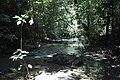 2014 Borneo Luyten-De-Hauwere-Forest-12.jpg