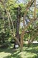 2014 Suchum, Ogród botaniczny (05).jpg