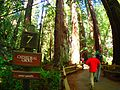 2016 Muir Woods National Monument P3301194.jpg
