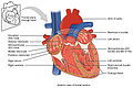 2018 Conduction System of Heart.jpg