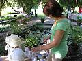 23 Zámek Veltrusy, kuchyňská zahrada.jpg