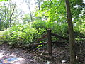 32 Lewiston Mound 4.JPG