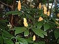 696 Botanischer Garten.JPG