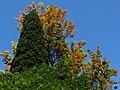 8 Taormina (107) (12879615924).jpg