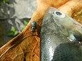 9018Fish shellfish of the Philippines 34.jpg