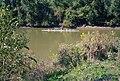 A4j007 9mp rowing near Towhead Island (6371459483).jpg