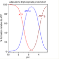 ATP protonation.png