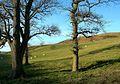 A Border Hillside - geograph.org.uk - 1077859.jpg