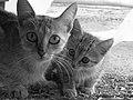 A Gata e seu filhote - panoramio.jpg