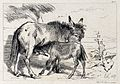 A donkey and its suckling foal. Etching by C. G. Lewis after Wellcome V0020829.jpg