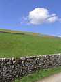 A field at Glendinning Farm - geograph.org.uk - 451216.jpg