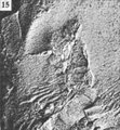 A monograph of the terrestrial Palaeozoic Arachnida of North America photos 11-15 15.png