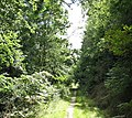 A pleasant forest path on the northern outskirts of Llanelltyd - geograph.org.uk - 742042.jpg