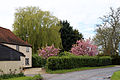 A road with cottage and flowering trees through Matching Tye, Essex, England.jpg
