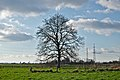A tree South of Doel, Belgium (DSCF3811).jpg