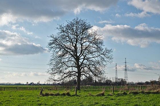 A tree South of Doel, Belgium (DSCF3811).jpg