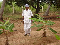 A typical farmer.jpg