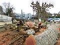 Abattage de platanes, Mussidan (1).jpg