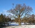 Abbey Fields - geograph.org.uk - 1652803.jpg